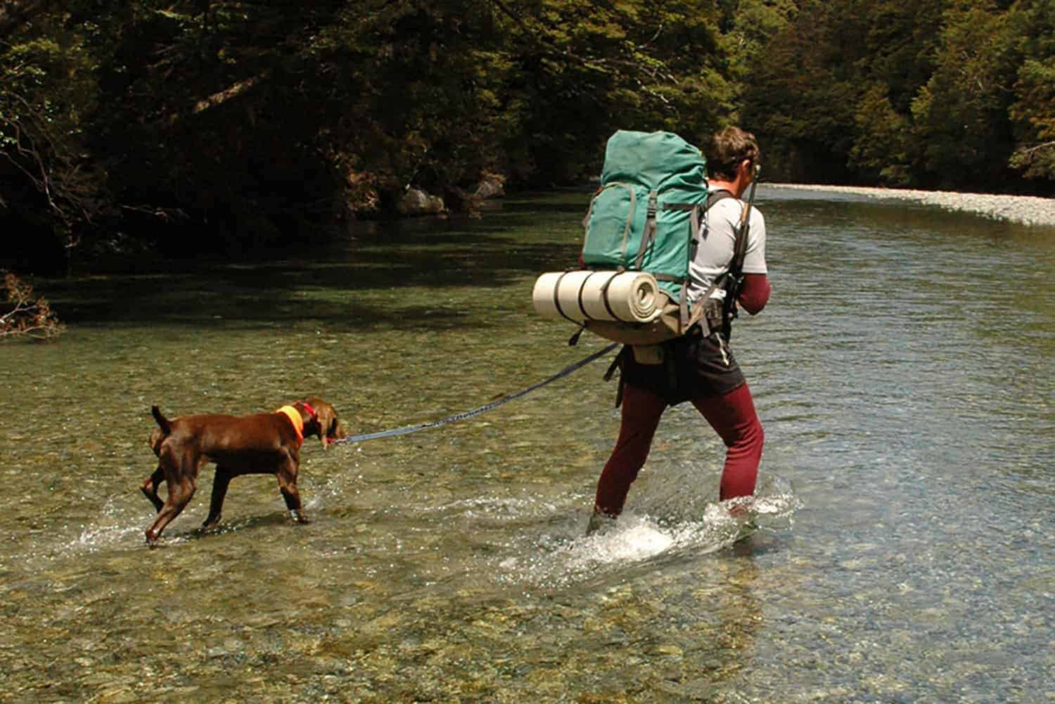 Tips for a Healthier Adventure for You and Your Dog
