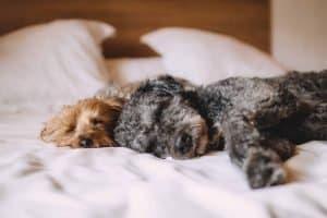 nappingdog