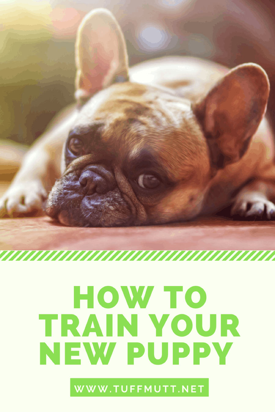 How To Train Your New Puppy Tuff Mutt Pets