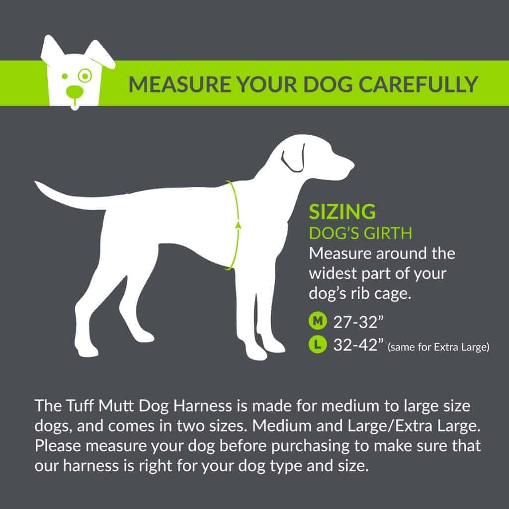 Forum on this topic: How to Make Your Dog Fit, how-to-make-your-dog-fit/