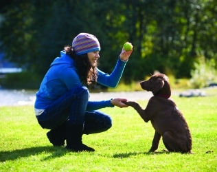 Tips for How To Effectively Train Your Dog